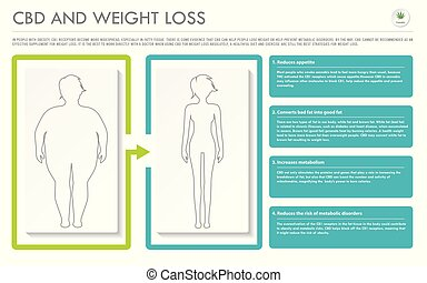 CBD and Weight Loss horizontal business infographic