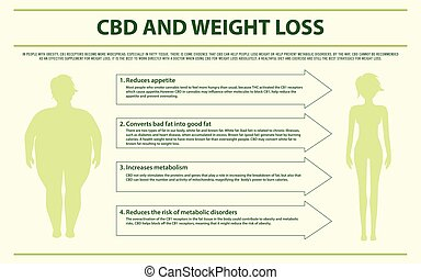 CBD and Weight Loss horizontal infographic illustration...