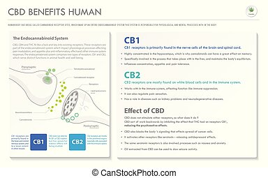 CBD Benefits Human horizontal business infographic