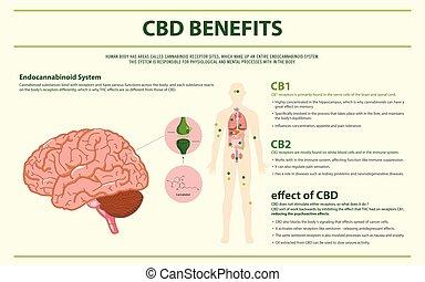CBD Benefits Human horizontal infographic illustration about...