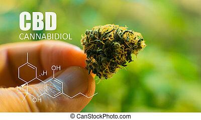cbd, cannabinoids, elementos, marijuana, thc