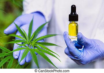 cbd, cannabis, pipette., hand houdend, prescribe., olie, ...