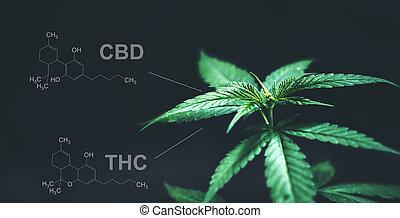 cbd, folhas, marijuana, químico, thc, estrutura