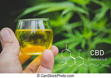 cbd hemp oil, formula CBD cannabidiol, doctor hand hold and ...