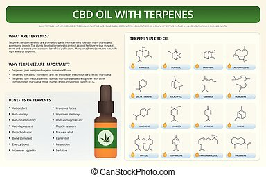 CBD Oil with Terpenes horizontal textbook infographic