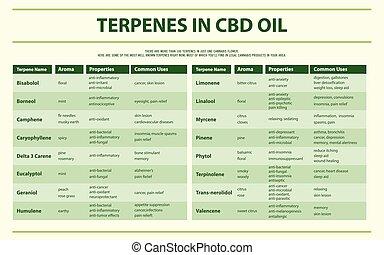 cbd, olio, infographic, orizzontale, terpenes