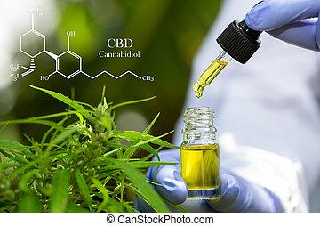 cbd, vasthouden, pipette., hand, olie, cannabis, medisch ...