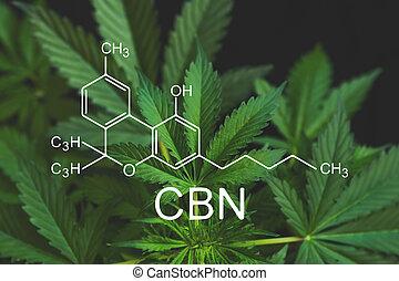 CBN formula, cannabinoid . Growing Marijuana, Hemp industry, CBD and THC elements in Cannabis, cannabinoids and health, despancery business. medical marijuana,