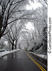cc, washington, invierno