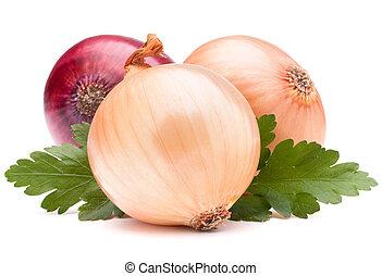 cebola, vegetal, bulbo, e, salsa, folhas, vida