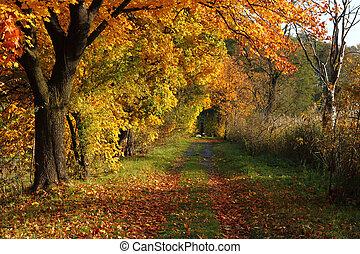 ceco, colorare, autunno, paese