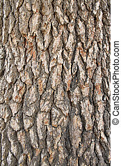 Cedar Bark Background Vertical