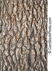 Cedar Bark Background Vertical