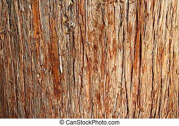 Cedar Bark - closeup of texture of red cedar bark