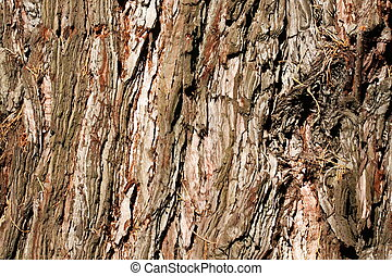 Cedar Bark Textured Background