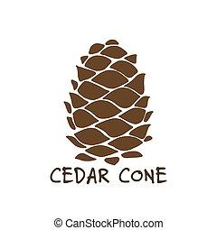 Cedar cone, sketch for your design. Vector illustration