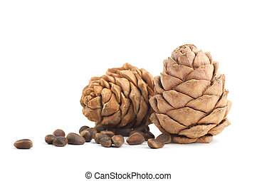 Cedar cones on a white background
