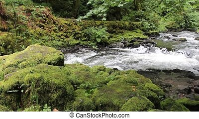 Cedar Creek Grist Mill Stream with Water Flowing Green Moss Leaves and Trees