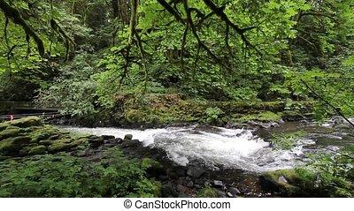 Cedar Creek in Woodland Washington