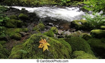 Cedar Creek in Woodland Washington