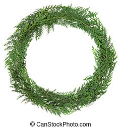 Cedar Cypress Wreath - Cedar cypress leaf wreath over white...