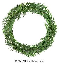 Cedar Cypress Wreath - Cedar cypress leaf wreath over white...