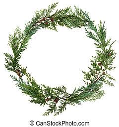 Cedar Leaf Wreath - Cedar cypress leaf wreath over white...