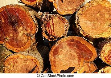 cedar logs with ice