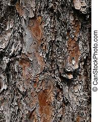 Cedar Pine, Texture of Bark 1 - A close-up of bark of cedar ...
