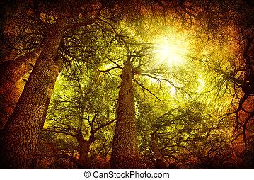 Cedar tree forest, rare Lebanese kind, grungy style photo