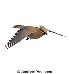 Cedar Waxwing. 3D rendering with clipping path and shadow ...