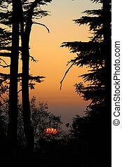 Cedars Sunset, Lebanon
