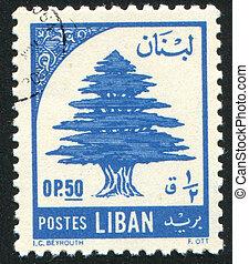 ceder, libanon