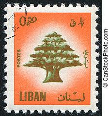ceder, van, libanon