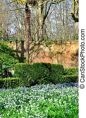 cedo, flores mola, inglês jardim