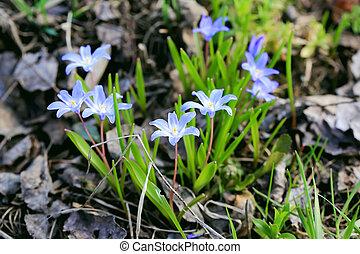 cedo, flores mola, jardim, primeiro