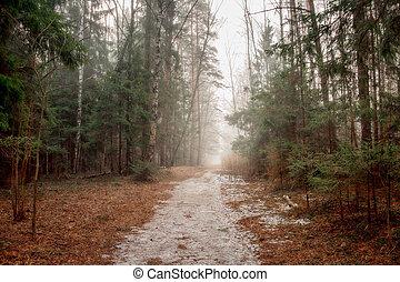 cedo, floresta nebulosa, paisagem, manhã