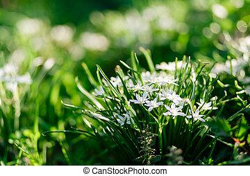 cedo, pequeno, flores, jardim
