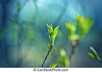 cedo, primavera, tiros, com, folhas, experiência azul