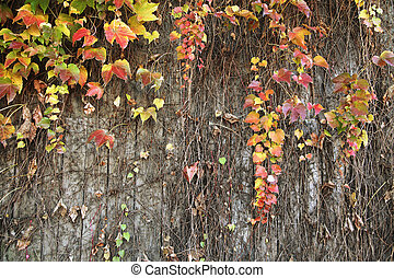 Ceeper plants wall