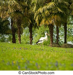 cegonha, árvores, palma, prado, contra