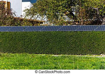 celas, solar, thujenhecke