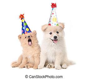 celebrando, aniversário, cantando, filhotes cachorro