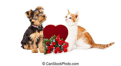 celebrando, valentines, filhote cachorro, dia, gatinho