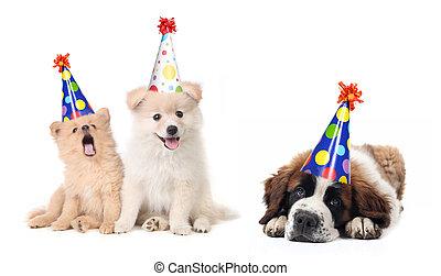 celebrar, cumpleaños, tonto, perritos