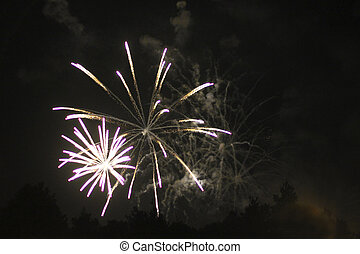 Celebration firework in the black night sky - The ...