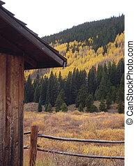 celeiro, e, álamos tremedores, em, outono