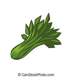 celery color illustration design