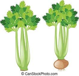 Celery plant on white background