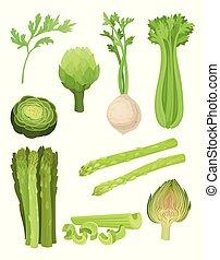 Celery set. Organic food concept. Vector illustration.